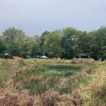 Cawley Meadow Turns 20